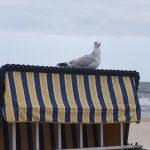 Möve auf Strandkorb
