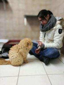 Garfield und Lisa