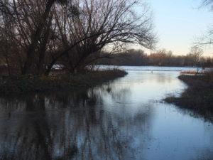 Rheinhochwasser - 709cm